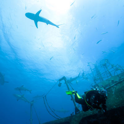 Diving With Sharks In Bali