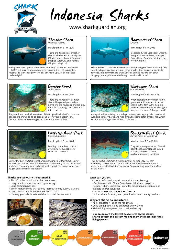 Sharks to see around Bali